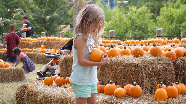 A little girl picking out a pumpkin at Carowinds' Halloween events for kids