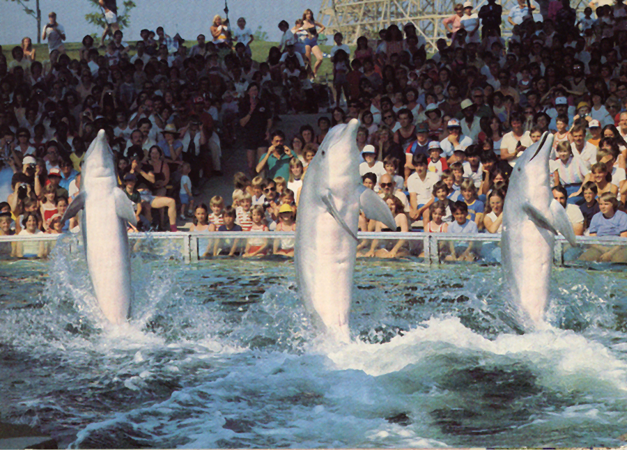 Dolphins at Bedrock Aquarium Canada's Wonderland 1992