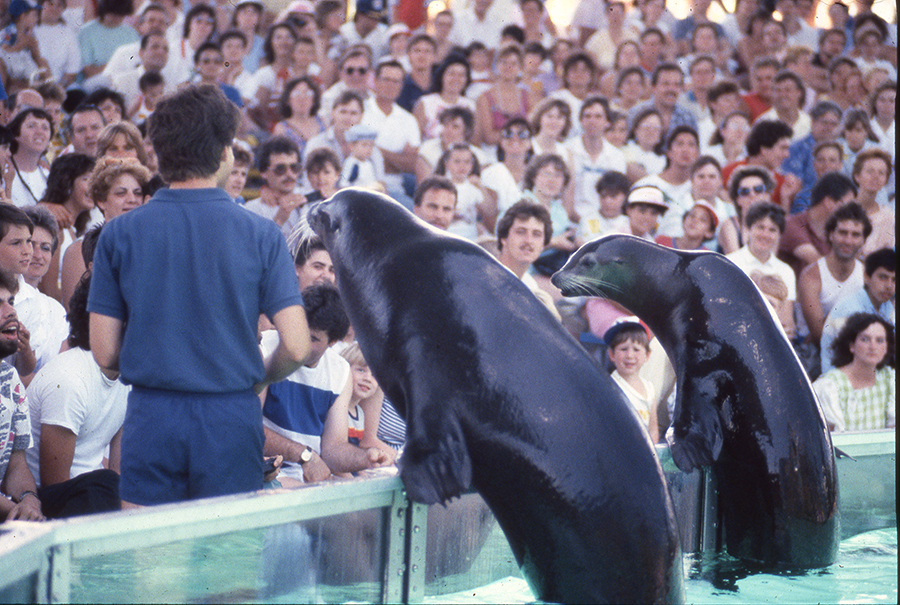 Sea lions at Canada's Wonderland Saltwater Circus 1986