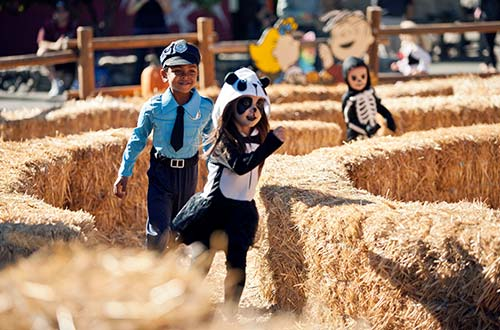 Peppermint Patty's Hay Bale Maze at Camp Spooky Halloween Event