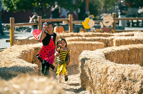 Linus' Pumpkin Patch & Bale Maze at Dorney Park's Halloween Event