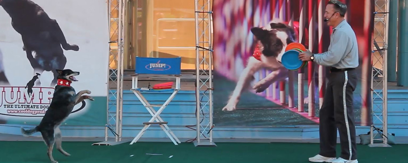 Jump: The Ultimate Dog Show