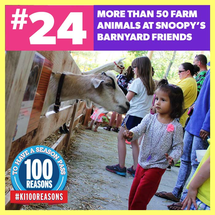More than 50 farm animals at Snoopy's Barnyard Friends